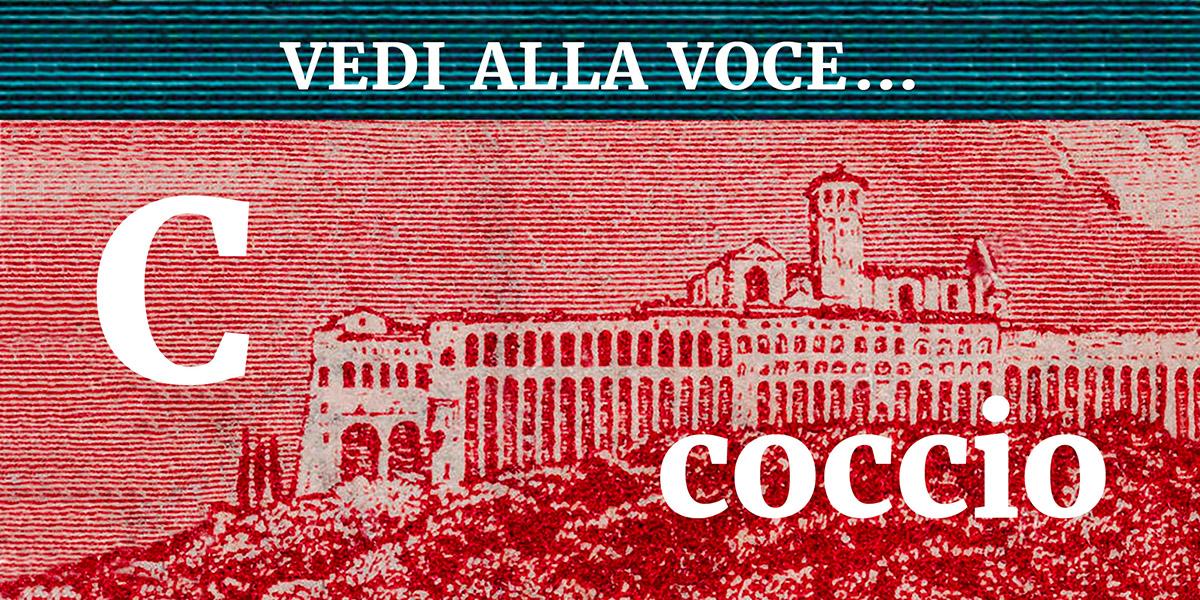 Coccio